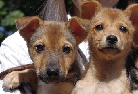 日本ドッグトレーナー協会_保護犬レポート_里親募集中_楓_紅葉20111025-3