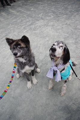 日本ドッグトレーナー協会_保護犬支援プロジェクト_10.30イベント3