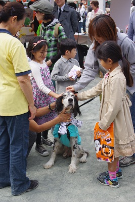 日本ドッグトレーナー協会_保護犬支援プロジェクト_10.30イベント5