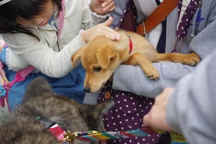日本ドッグトレーナー協会_保護犬支援プロジェクト_10.30イベント7