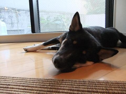 日本ドッグトレーナー協会_保護犬レポート_結1120-3
