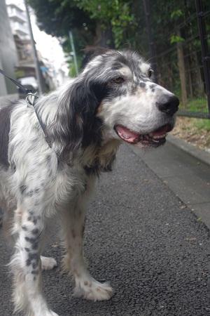 日本ドッグトレーナー協会_保護犬支援プロジェクト_今後_1122-6