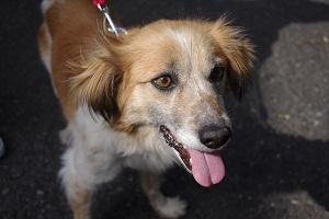 日本ドッグトレーナー協会_保護犬支援プロジェクト_今後_1122-4