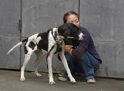 日本ドッグトレーナー協会_保護犬レポート_太斗1108-3