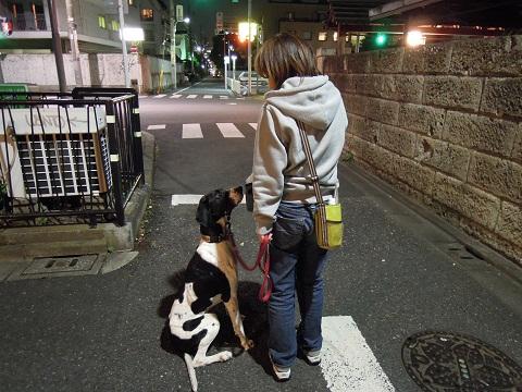 日本ドッグトレーナー協会_保護犬レポート_太斗1108-1