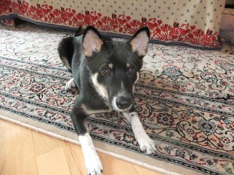 日本ドッグトレーナー協会_保護犬レポート_結1120-5
