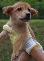 日本ドッグトレーナー協会_保護犬_紅葉