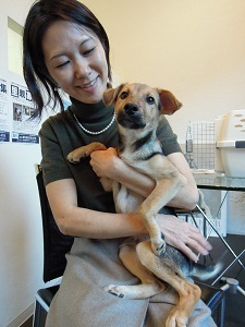 日本ドッグトレーナー協会_保護犬支援プロジェクト_保護犬レポート_楓1117-3