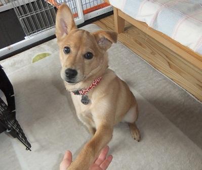 日本ドッグトレーナー協会_保護犬レポート_紅葉1224-3