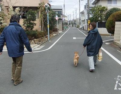 日本ドッグトレーナー協会_保護犬レポート_紅葉1224-4