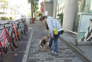 日本ドッグトレーナー協会_保護犬支援プロジェクト_保護犬レポート_楓1210-4