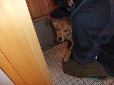 日本ドッグトレーナー協会_保護犬レポート_紅葉1224-5
