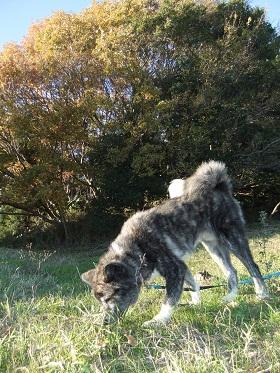 日本ドッグトレーナー協会_保護犬レポート_BUZZ1220-1