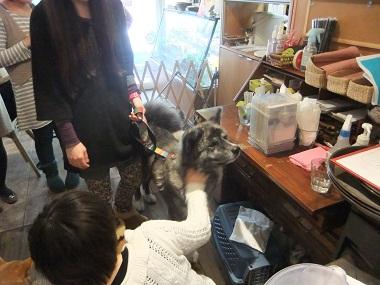 日本ドッグトレーナー協会_保護犬レポート_BUZZ1220-3
