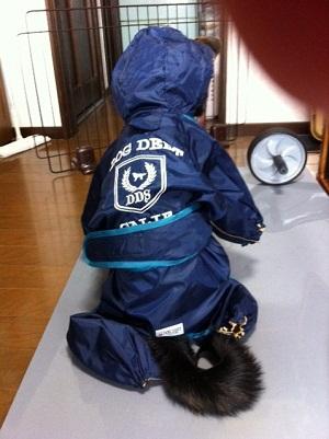 日本ドッグトレーナー協会_保護犬レポート_福1207-3