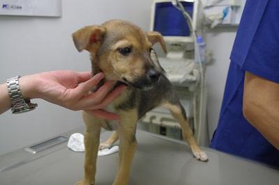 日本ドッグトレーナー協会_保護犬支援プロジェクト_保護犬レポート_楓1210-1