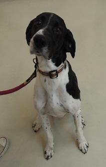 日本ドッグトレーナー協会_保護犬支援プロジェクト_年末年始_1227-1