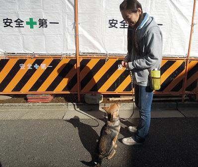 日本ドッグトレーナー協会_保護犬支援プロジェクト_保護犬レポート_楓1210-5