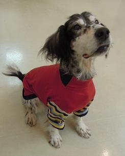 日本ドッグトレーナー協会_保護犬支援プロジェクト_年末年始_1227-2