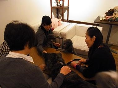 日本ドッグトレーナー協会_保護犬レポート_BUZZ1220-4