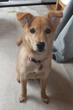 日本ドッグトレーナー協会_保護犬レポート_紅葉1224-2