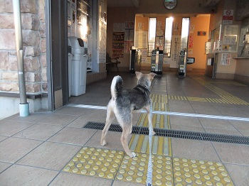 日本ドッグトレーナー協会_保護犬支援プロジェクト_保護犬レポート_楓1215-5