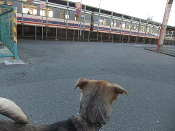 日本ドッグトレーナー協会_保護犬支援プロジェクト_保護犬レポート_楓1215-4