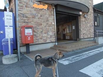 日本ドッグトレーナー協会_保護犬支援プロジェクト_保護犬レポート_楓1215-3