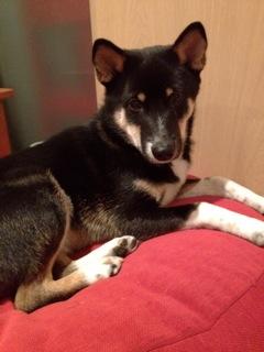 日本ドッグトレーナー協会_保護犬レポート_結2012-0119-2