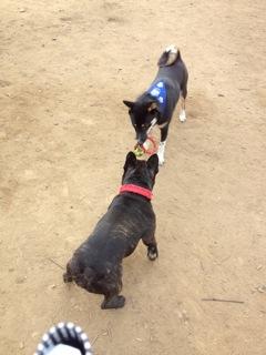 日本ドッグトレーナー協会_保護犬レポート_結2012-0119-1