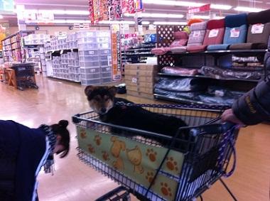 日本ドッグトレーナー協会_保護犬レポート_福0106-2
