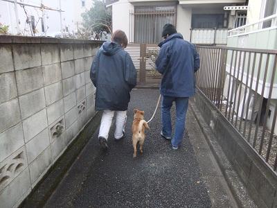 日本ドッグトレーナー協会_保護犬レポート_紅葉2012-0123-1
