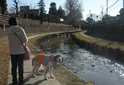 日本ドッグトレーナー協会_保護犬レポート_元12-0114-2