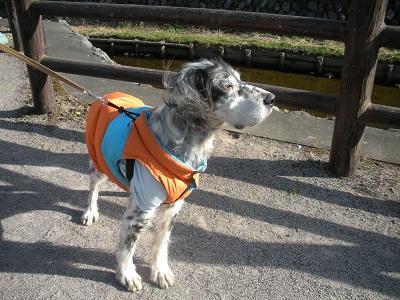 日本ドッグトレーナー協会_保護犬レポート_元12-0114-1