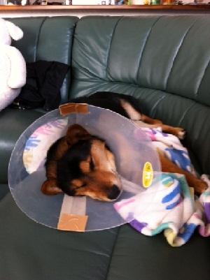 日本ドッグトレーナー協会_保護犬レポート_福2012-0117-1
