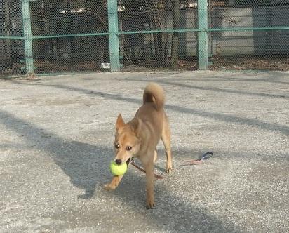 日本ドッグトレーナー協会_保護犬レポート_紅葉2012-0123-3