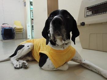 日本ドッグトレーナー協会_保護犬レポート_太斗2012-0226-5