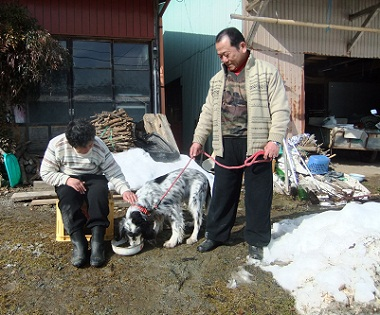 日本ドッグトレーナー協会_保護犬レポート_元12-0207-3