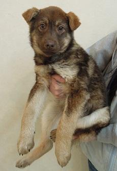 日本ドッグトレーナー協会_保護犬レポート_すみれみずき2012-0228-5