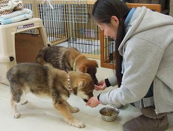 日本ドッグトレーナー協会_保護犬レポート_すみれみずき2012-0228-6