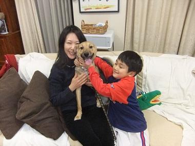 日本ドッグトレーナー協会_保護犬支援プロジェクト_保護犬レポート_楓2012-0210-4