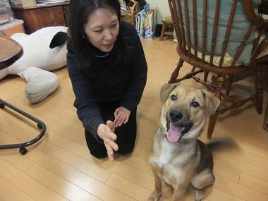 日本ドッグトレーナー協会_保護犬支援プロジェクト_保護犬レポート_楓2012-0210-3