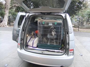 日本ドッグトレーナー協会_保護犬レポート_元12-0207-1