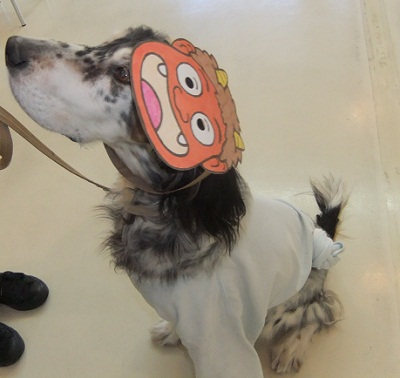 日本ドッグトレーナー協会_保護犬支援プロジェクト_節分_20120203-2