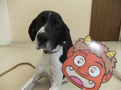 日本ドッグトレーナー協会_保護犬支援プロジェクト_節分_20120203-3