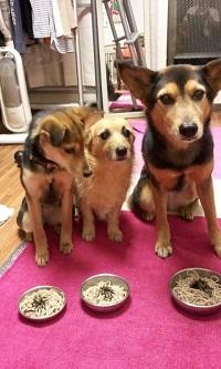 日本ドッグトレーナー協会_保護犬レポート_杏2012-0222-2