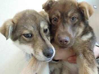 日本ドッグトレーナー協会_保護犬レポート_すみれみずき2012-0228-1