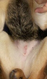 日本ドッグトレーナー協会_保護犬レポート_杏2012-0222-1