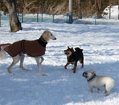 日本ドッグトレーナー協会_保護犬レポート_福2012-0306-1