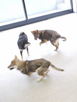 日本ドッグトレーナー協会_保護犬レポート_すみれみずき2012-0329-4